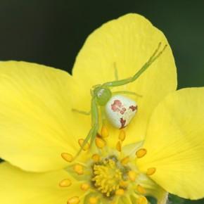Une femelle confiante, sans souci pour le camouflage.