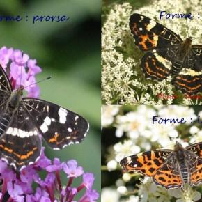 Et voici les trois formes représentées sur ce montage photo.