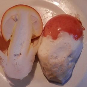 Une coupe de l'œuf dans le sens de la hauteur, la petite Amanite des Césars est déjà bien formée.